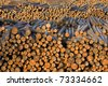 Long Straight Logs in Wood Pile in Lumber Mill Waiting for Production - stock photo