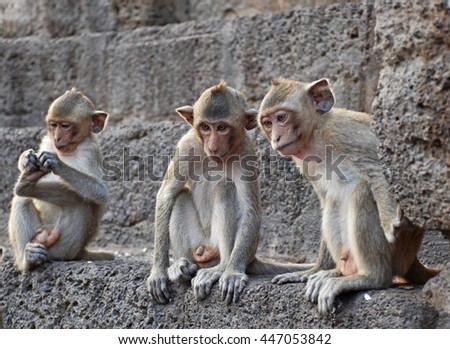 Long tail Funny monkeys of Lopburi Thailand