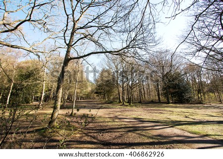 Long view of glade in Sussex woodland, the early springtime throws long shadows