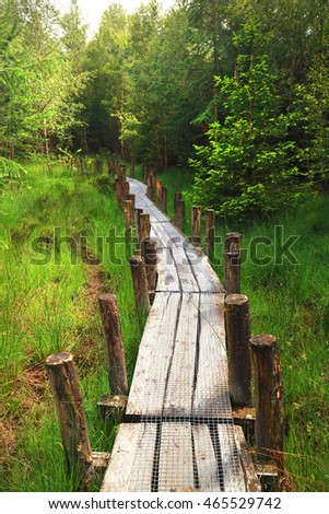 long wooden path into green forest