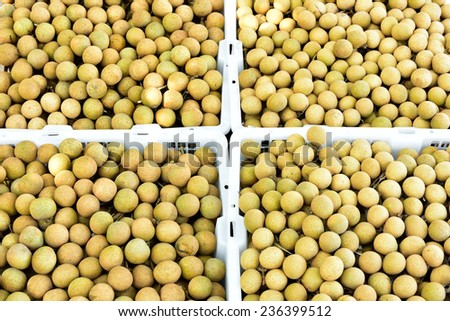 Longan orchards -Tropical fruits longan in Lamphun, Thailand