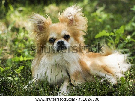 Black And Brown Fluffy Dogs