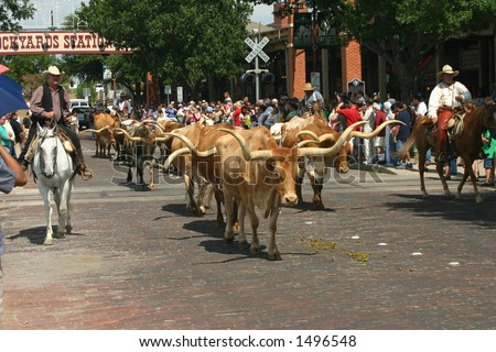 Longhorns in the Stockyards - stock photo