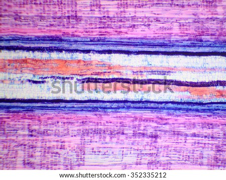 Longitudinal section of the stem woody plant under the microscope (Basswood Stem L.S.) - stock photo