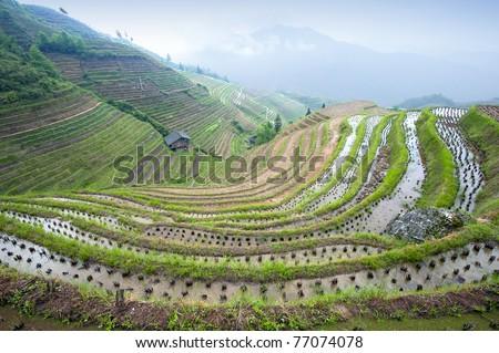 Longji rice terraces (Guangxi province, China) - stock photo