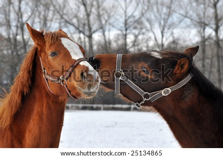longtime friendship - stock photo