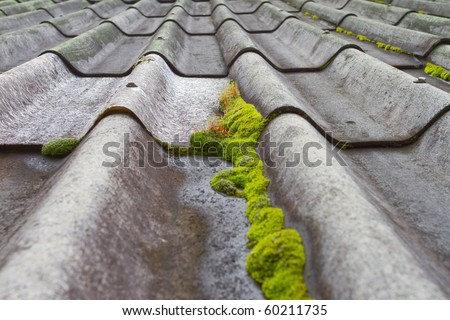 Look at the moss on the roof. - stock photo