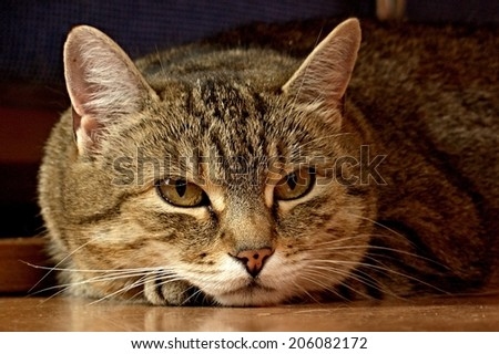 Look of a cat resting on the floor - stock photo