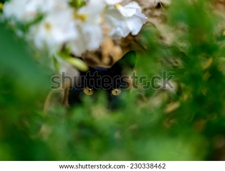look of a wild cat - stock photo