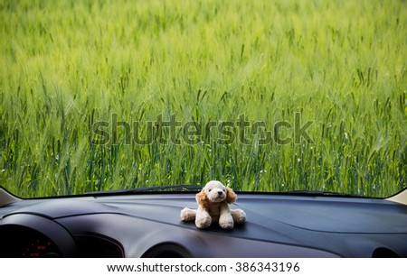 Look out the car window to see the wheat fields,use for background.