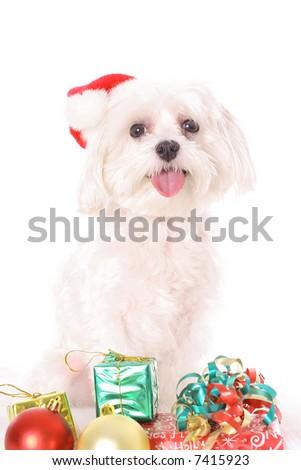 Look what Santa brought - stock photo