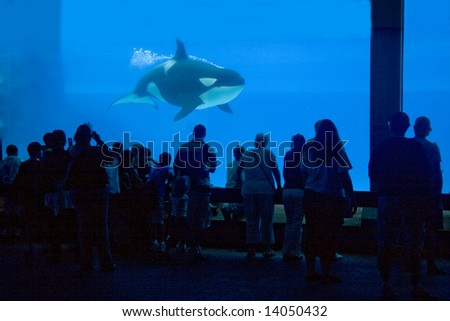 looking at the orca - stock photo