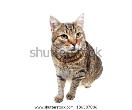 Looking cat kitten on a white background - stock photo