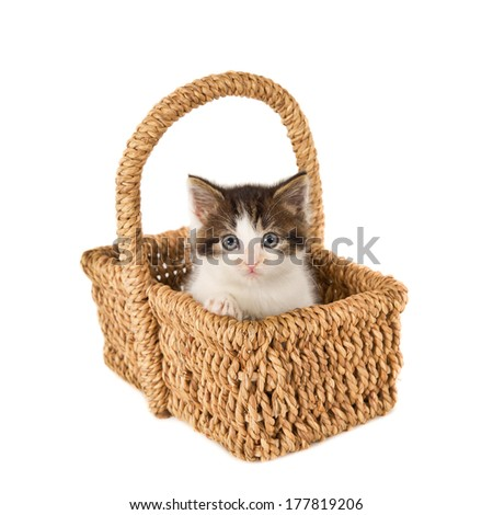 Looking kitten with blue eyes in basket, isolated on white  - stock photo