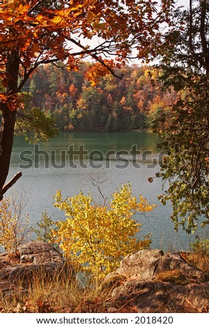 Looking through colorful trees - stock photo
