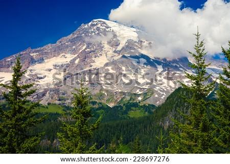Looking up at Mt. Rainier in the distance, Mt. Rainier National Park, Washington, USA. - stock photo