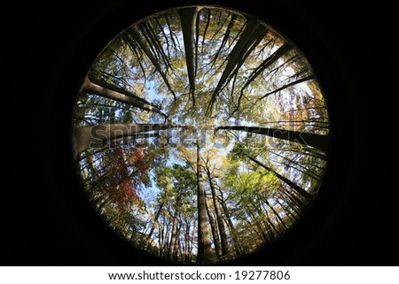 Looking up at the sky from a fish eye point of view. - stock photo