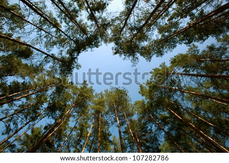 Looking up forest perspective - stock photo