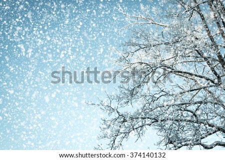 Looking up in a tree with snow and a sky with snow falling down. - stock photo