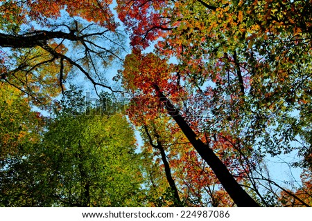 Looking up in the forest crown of trees sky - stock photo