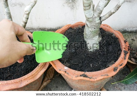 loosen the soil in a small pot with a green small shovel - stock photo
