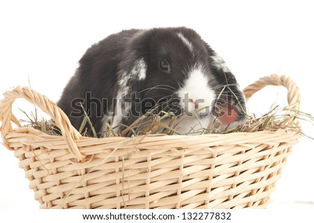 Lop-eared rabbit in a basket isolated on white - stock photo