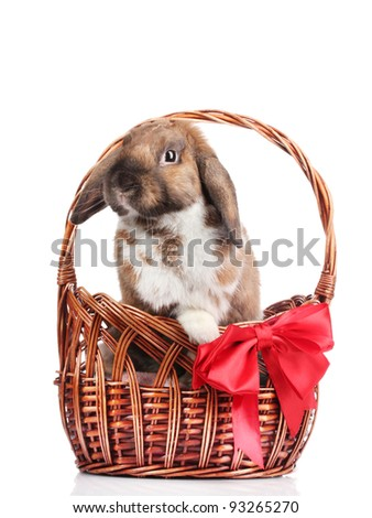 Lop-eared rabbit in a basket with red bow isolated on white - stock photo