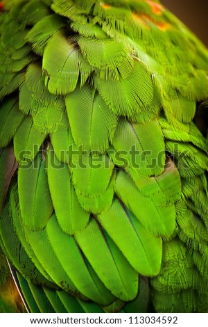 lori Lorikeet detail - stock photo