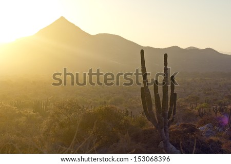 Los Cabos, Mexico. Landscape during the sunset with cactus and beautiful mountains. - stock photo