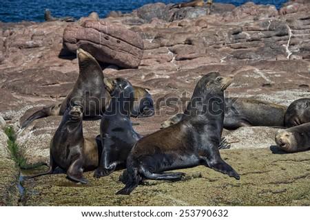 los islotes mexico espiritu santu island sea lion retreat - stock photo
