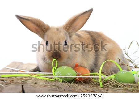 lose-up of easter bunny on white background studio - stock photo