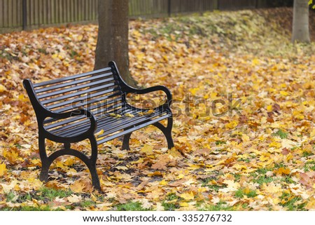 Loss or bereavement concept empty park bench surrounded by trees and golden Autumn or Fall leaves - stock photo