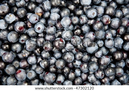 Lot of blueberries - stock photo