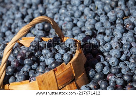 Lot of fresh blueberry with full bast basket, selective focus - stock photo