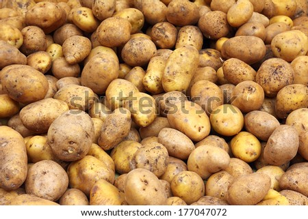 lot of potatoes - food background