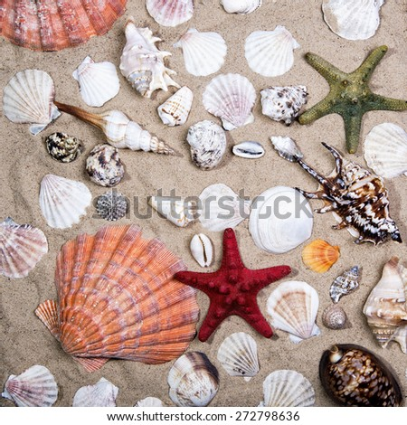 Lot of Sea shells and starfishes on sand as background - stock photo