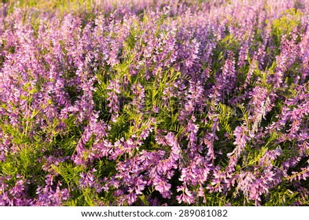 Lots of flowers in the meadow on sunset, top view - stock photo
