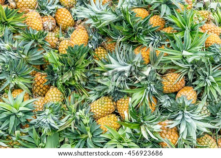 lots of fresh pineapple fruit in different view