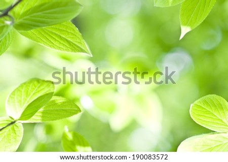 Lots of green leaves with the sun shining through them. - stock photo