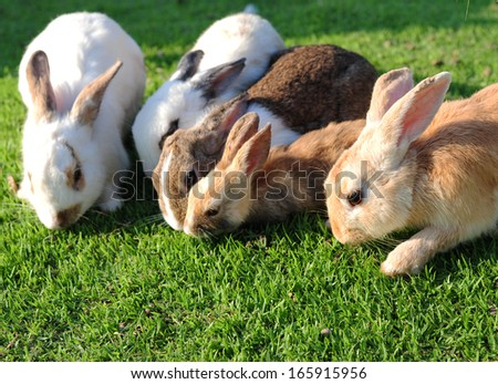 Lots of Rabbit in a green grass - stock photo