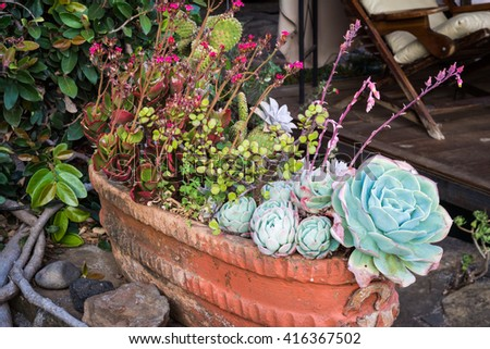 Lots of Succulents in a large pot and some stones