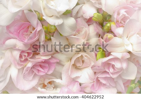 Lots of white and pink freesia flowers and green buds, nostalgic and romantic setting in soft light, highlight vignette, background - stock photo