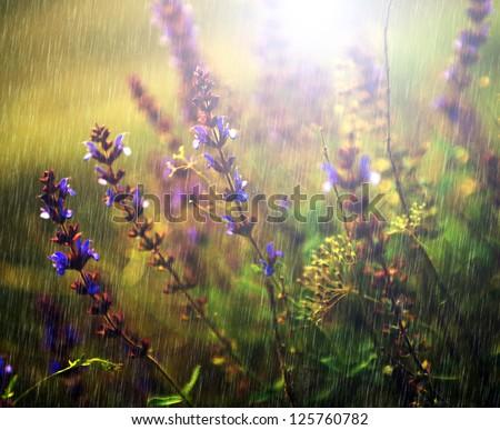 Lots of wild flowers in rain - stock photo