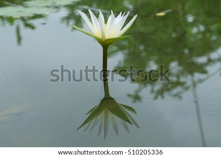 lotus and shadows
