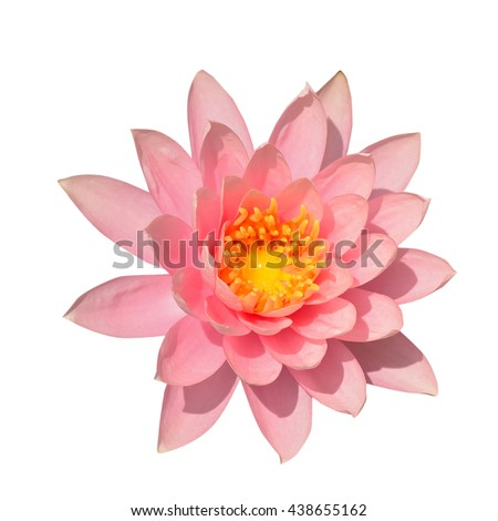 lotus flower stock images, royaltyfree images  vectors, Beautiful flower