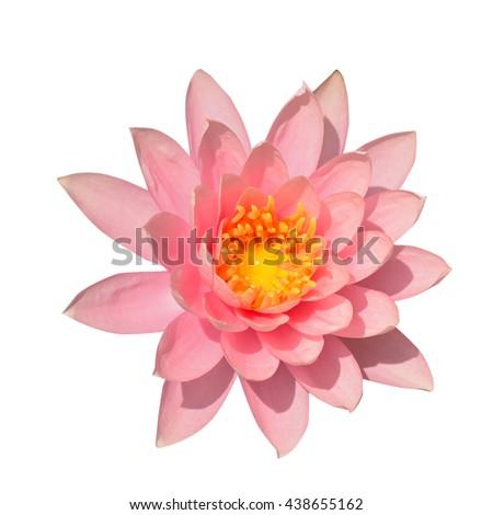 Lotus buds Lotus flower and Lotus flower plants. - stock photo