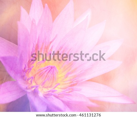 Lotus can be used for background , unfocused