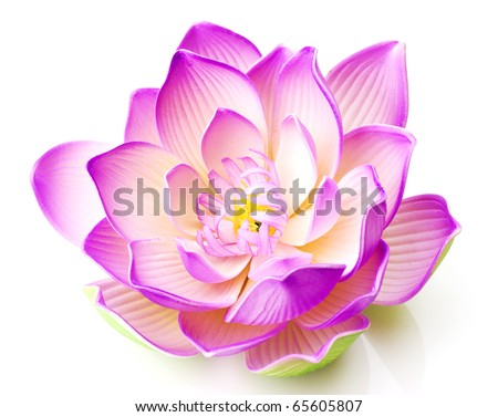 lotus flower stock images, royaltyfree images  vectors, Natural flower