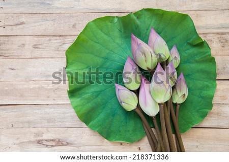 Lotus flower and Lotus flower plants on lotus leaf - stock photo