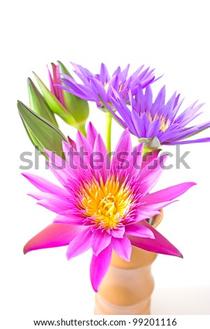 Lotus flower in a vase isolated on white background - stock photo